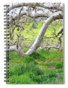 Low Branches On Sycamore Tree Spiral Notebook