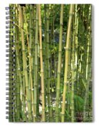 Lucky Bamboo Spiral Notebook