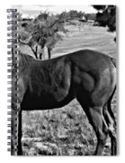 Lucky Student IIi Spiral Notebook