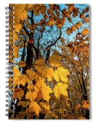 Luminous Leaves Spiral Notebook