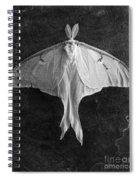 Luna Moth  Spiral Notebook