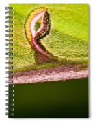 Luna Moth Eye Spiral Notebook