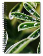 Lupine Leaves Decorated With Dew Drops Spiral Notebook