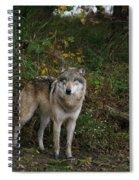 Lupine Pose Spiral Notebook