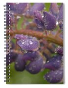 Lupine With Raindrops Spiral Notebook