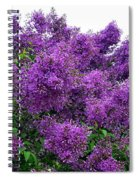 Luxurious Lilacs Spiral Notebook