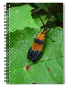 Lycomorpha Moth Spiral Notebook