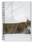 Lynx Hunting In The Snow Spiral Notebook