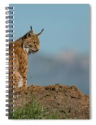 Lynx In Profile On Rock Looking Down Spiral Notebook