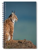 Lynx In Profile On Rock Looking Up Spiral Notebook