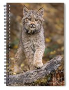 Lynx Kit Spiral Notebook