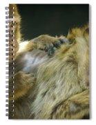 Macaques Jerez De La Frontera Spain Spiral Notebook