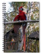Macaw Guatemala Spiral Notebook