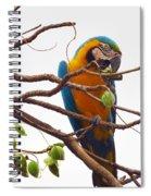 Macaw  Spiral Notebook