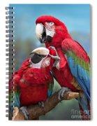 Macaw Love Spiral Notebook