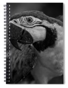 Macaw Portrait In Black And White Spiral Notebook