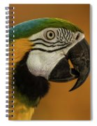 Macaw Portrait Spiral Notebook