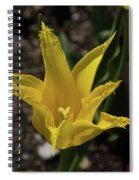 Mackinac Island Flowers 10663 Spiral Notebook