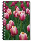 Mackinac Island Tulips 10681 Spiral Notebook