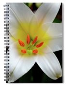 Macro Close Up Of White Lily Flower In Full Blossom Spiral Notebook