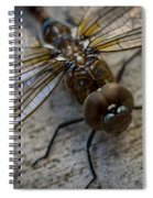 Macro Dragonfly Spiral Notebook