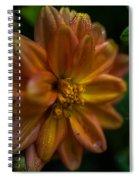 Macro Of Dahlia Flower Spiral Notebook