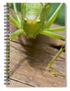 Mad Spiral Notebook