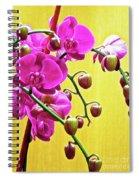 Magenta Orchid 3 Spiral Notebook