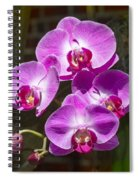 Magenta Orchids Spiral Notebook
