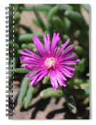Magenta Purple Desert Moss Rose Spiral Notebook