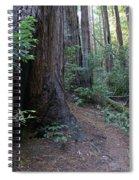 Magical Path Through The Redwoods On Mount Tamalpais Spiral Notebook