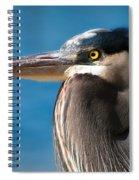 Magnificent Blue Heron Spiral Notebook