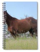 Magnificent Horse Spiral Notebook