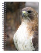 Magnificent Red-tailed Hawk  Spiral Notebook
