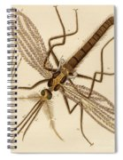 Magnified Mosquito Spiral Notebook