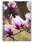 Magnolia Blooming In An Early Spring Spiral Notebook