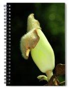 Magnolia Bud Spiral Notebook