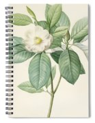 Magnolia Glauca Spiral Notebook