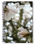 Magnolia Tree Flowers Pink White Magnolia Flowers Spring Artwork Spiral Notebook