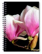 Magnolias In Spring Bloom Spiral Notebook