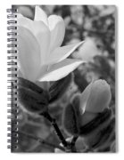 Magnolias In Spring Spiral Notebook