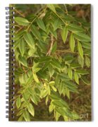 Mahogany Leaves On A Branch Spiral Notebook