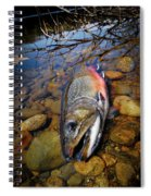 Maine Brookie Spiral Notebook