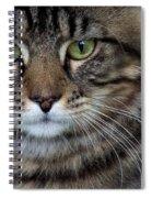 Maine Coon Cat Portrait Spiral Notebook