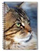 Maine Coon II Spiral Notebook