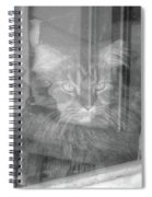 Maine Coon In Window Spiral Notebook