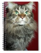 Maine Coon Portrait Spiral Notebook