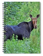 Maine Moose Spiral Notebook