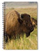Majestic Bison Spiral Notebook