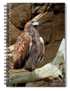 Majestic Eagle Spiral Notebook
